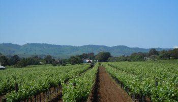 vineyard-layout-six-gates-winery-barossa-valley